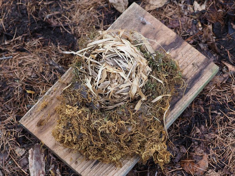 冬眠 ヤマネ ネズミと思ったら「冬眠中のヤマネ」 長崎・金泉寺山小屋、毛布の中に